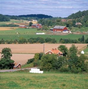 Jordbrukslandskap. Nötkreatur, kor, åkrar, byggnader, ladugård. Foto: Mats Pettersson