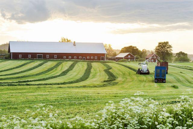 Bild på åker med vallgröda