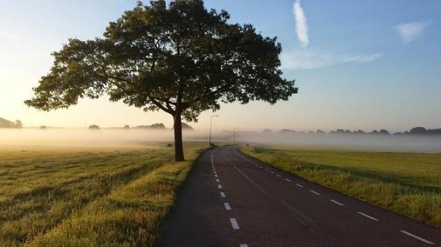 Bild på träd vid dimmig landsväg