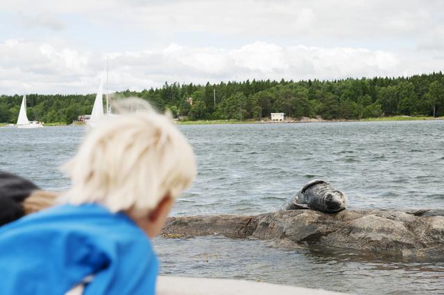 Bild på en säl som ligger på en klippa i vattnet. I förgrunden syns ett barn som tittar på sälen.