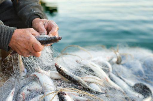 Fiskfångst i nät