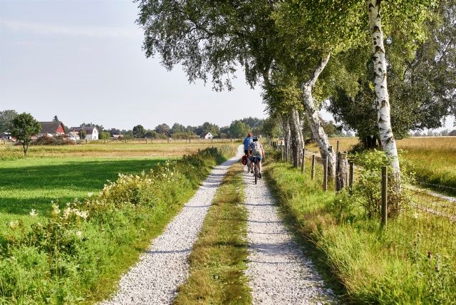 Två personer cyklar på en grusväg på sommaren.