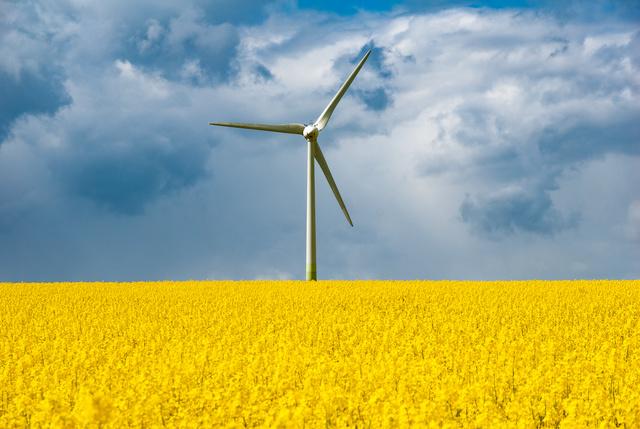 Foto på ett vindkraftverk med ett rapsfält i förgrunden. I bakgrunden syns en blå himmel.