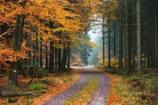 Foto på en grusväg och träd med löv i höstfärger.